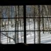 窓から見た阿寒の森