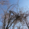 樹のアーチ
